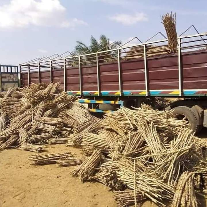 Anambra-Lawmaker-Distributes-Cassava-Stems-To-Constituents-Afrinotes