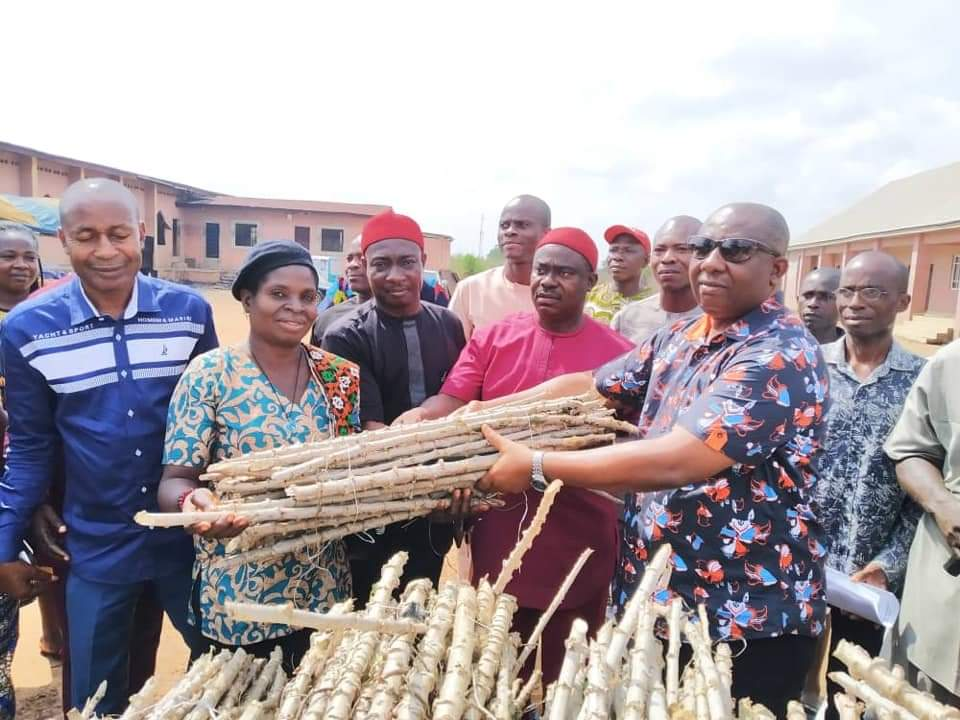 Anambra Lawmaker Distributes Cassava Stems To Constituents